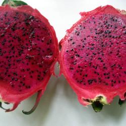 RED-DRAGON-FRUIT-JUICE-PUREE-Pitahaya-fructul-dragonului-pitaya5