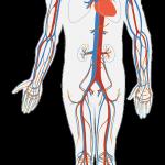 masaj-pentru-stimularea-circulatiei-periferice