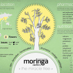 Moringa-Oleifera1